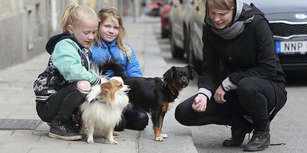 Att lära personer som är ovana vid hundar möta dem på rätt sätt