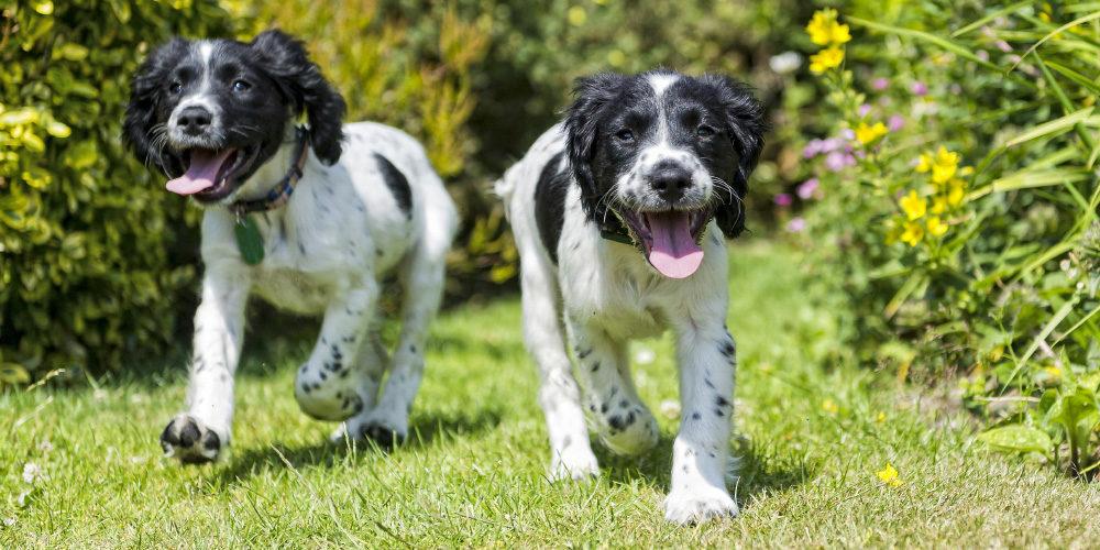 valp trädgård sommar Härliga Hund