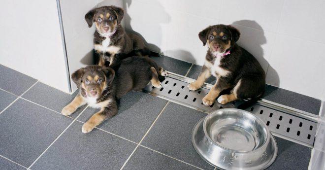 Fotografiska kloning Aleksi Valmunen Härliga Hund