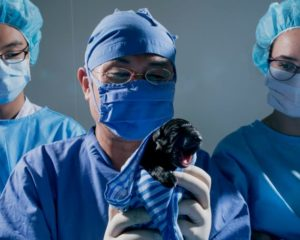 I Sydkorea kan man köpa sig en klonad valp för 100 000 dollar. Foto från utställningen The same new pet på Fotografiska av Aleksi Valmunen.