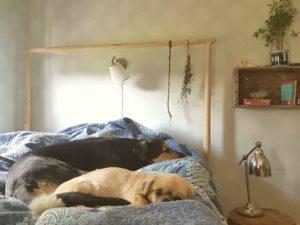 De sover inte sked, Kroi och Krutor, men de ligger nära varandra.