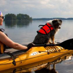 äventyr med hund Härliga hund Gunnika Ivarsson