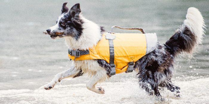 Slyväst för hund Härliga Hund båtliv med hund