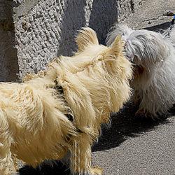 En lös hund som objuden kommer fram till en kopplad kan vara en mardröm för den kopplade hundens ägare.