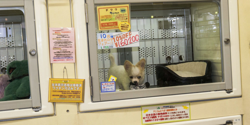 Hundliv i Japan - inte som i Sverige