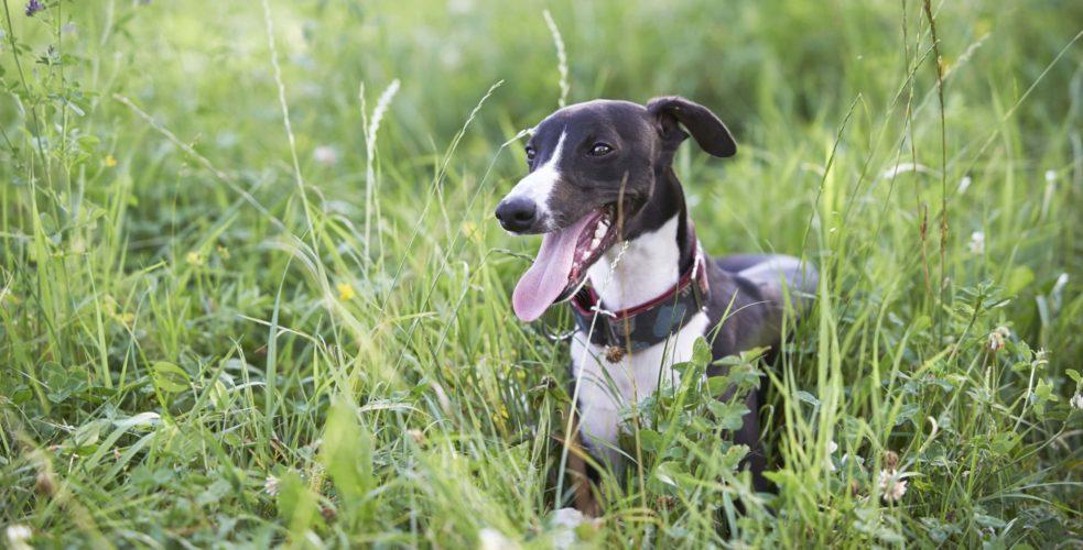 hund på rymmen Härliga hundar id-register gps-trackar Missing Dog Sweden