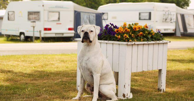 ympa med hund Härliga Hund?