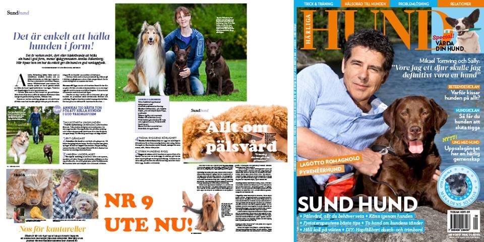 Härliga Hund tidning hundar sund hund pälsvård