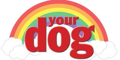 Minns dina hundar