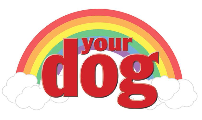 Härliga hund döda hudanr kom ihåg din gamla hund