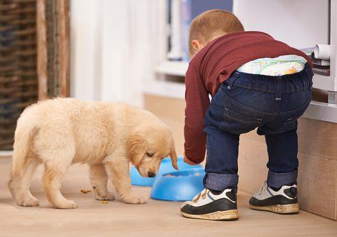 Carro Alupo hundmat hundträning Härliga hund hundmatskål barn och hund