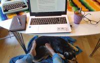 Carro Alupo Kpi Härliga hund Carros blogg 10 ben och två svansar