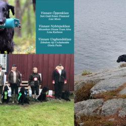 Det stora rasmästerskapet Flatmästerskapet på Gålö lockade hela 440 hundar till start.