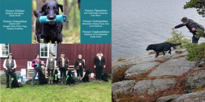 Över 440 flatcoated retrivers tävlade på Flatmästerskap på Gålö