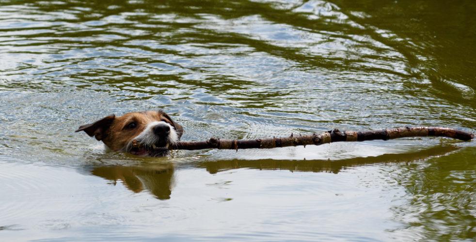 Vattenlekar är härligt, men låt inte hunden svälja stora mängder.