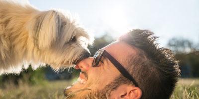 Hundars samspel med ägaren