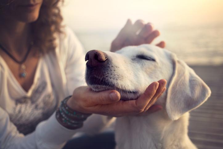 Hunden undviker otrevliga människor