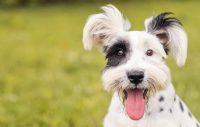 Hundar gör livet meningsfullt