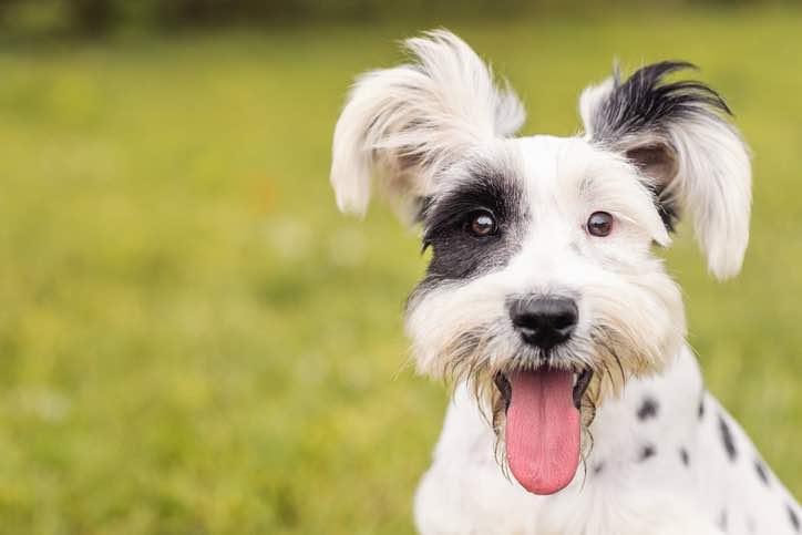 8 goda skäl att ha hund