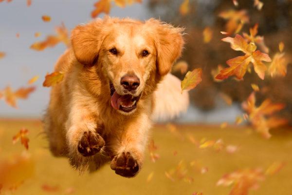 Hundskoj i september