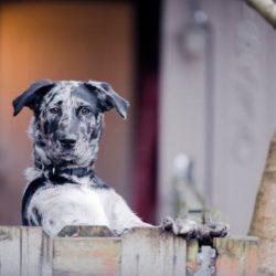 hundsämja grannsämja arga hundar Härliga hund Carro Alupo
