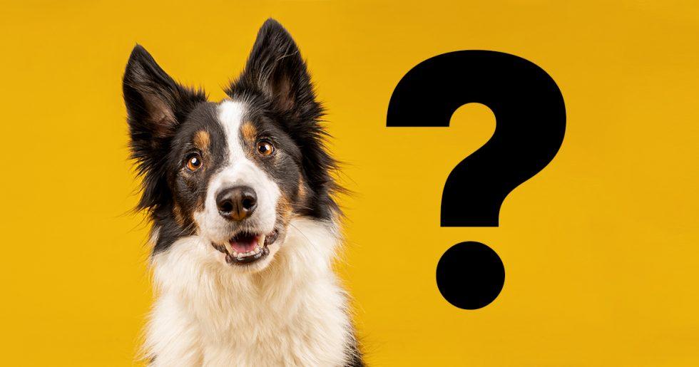 Förstår du hundspråket?