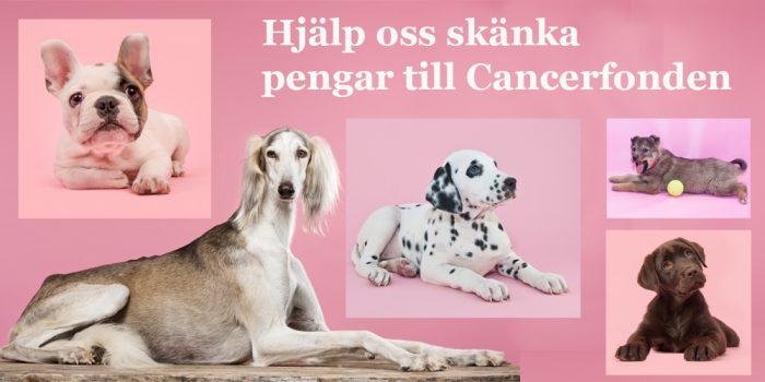 Var med och skänk pengar till Cancerfonden