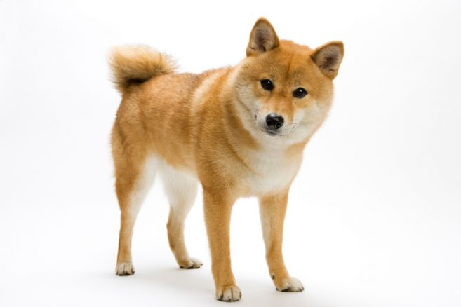 Vilka är våra friskaste hundraser?