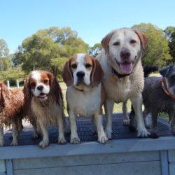 Alltså, vi ska ju trivas i vår rastgård - kunna leka tillsammans, vilja hänga, ha det härligt! Så ska en rastgård kännas för hunden!