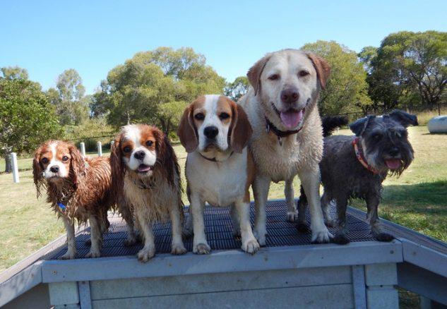 Hundgårdsnät hundrastgård hundgård stängsel