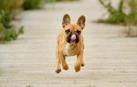 200-analys för två nya hundraser