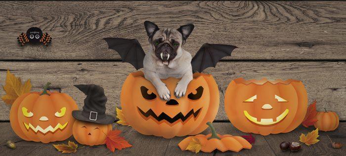 Är det OK att klä ut hunden på på Halloween?