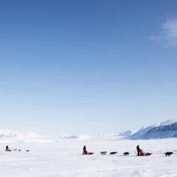 Slädhundstävlingen Iditarod har drabbats av flera dopingfall.