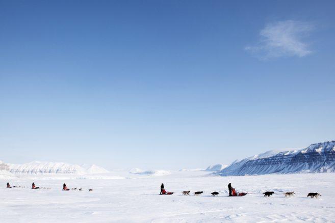 Dopade hundar i Iditarod