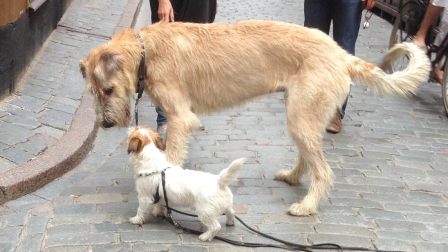 Med hund mitt i stan!