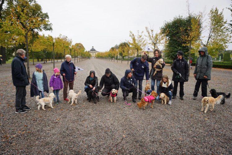 Cockerpoo-föreningen firar 10 år i Sverige