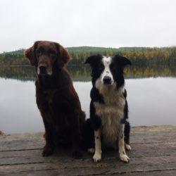 Lena Hedlund har skickat in en bild på sina hundar Tilda och Tala. Gör det du med! Skicka in till oss, eller publicera direkt på Facebook.