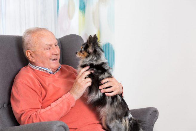 Ny studie visar – hundägare drabbas mer sällan av hjärtåkommor