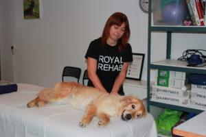 Regelbunden massage gör att Bindie håller sig smidig.