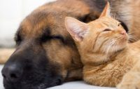 Agria djurförsäkring, veterinär, frisk hund, sund hund,