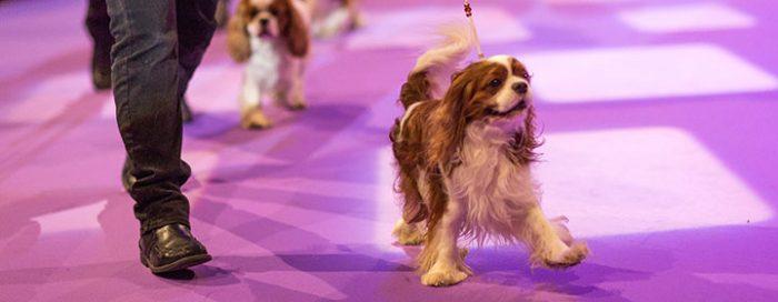 Den 14 november sista dag för anmälan Stockholms Hundmässa