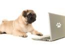 Rätt namn för Internethundar