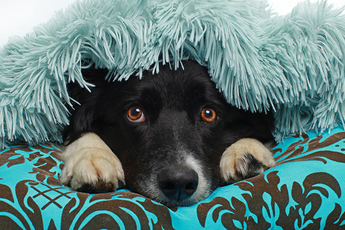 Tips för fyrverkerirädda hundar
