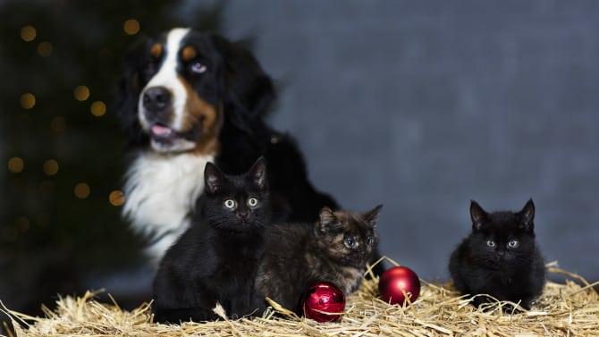 Skydda djuren från julens frestelser