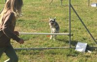 Ny chans för hundägare att söka stipendium