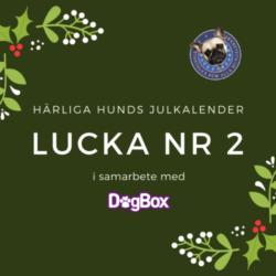Julkalendern 2 december
