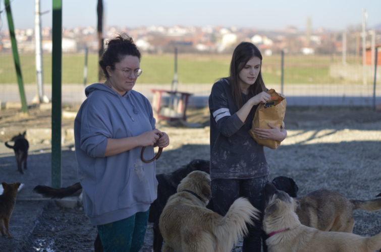 Prishtina dog shelter, avsnitt 1: Vi hittar Libra