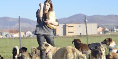Prishtina dog shelter, avsnitt 2: Julafton i Prishtina 2017