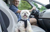 Har du en hund som inte gillar att åka bil?