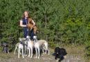 UNG MED HUND Emma Westman, 14 år har nio hundar i familjen